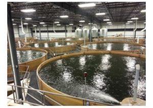 aquaculture Web